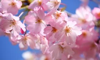 Květnové akce
