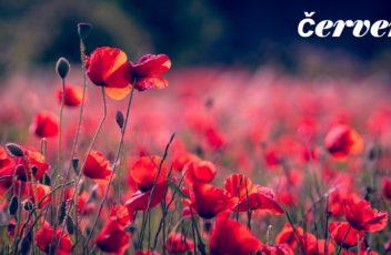 poppies-3374193_1280