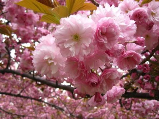 Plán na měsíc květen