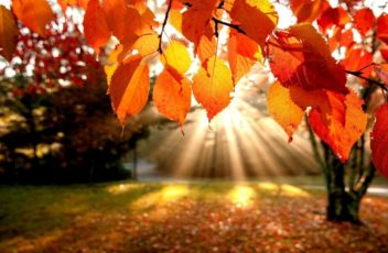 autumn-leaves-wallpaper-1280x720