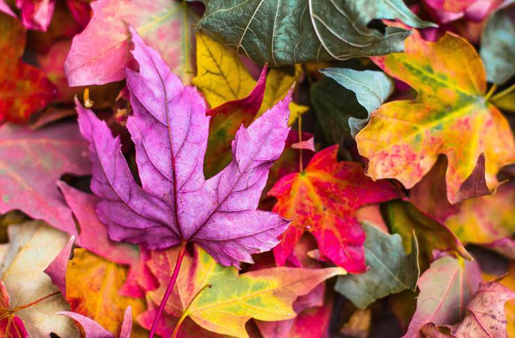 Podzimní prázdniny a ředitelská volna