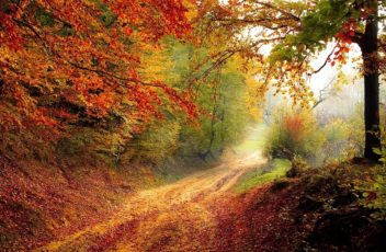 podzimm