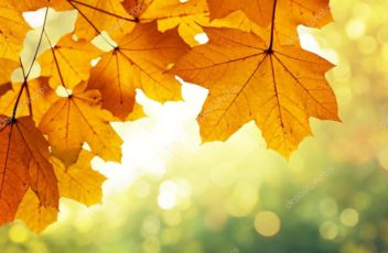 depositphotos_54728899-stock-photo-leaves-in-autumn-forest