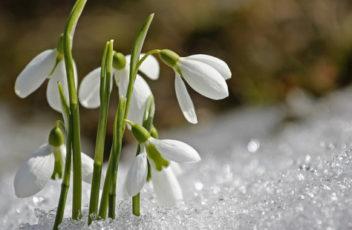 spring-1166564_960_720