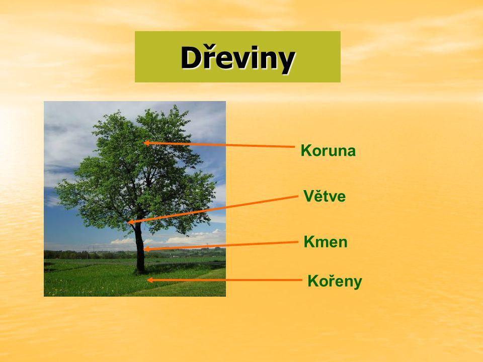 Tento obrázek nemá vyplněný atribut alt; název souboru je Dřeviny-1.jpg.