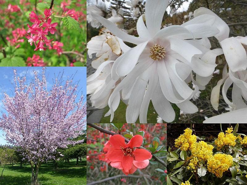 Přírodověda - Kvetoucí stromy a keře